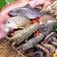 HOW TO REMOVE SLIME FROM FISH by Folashade Akoni